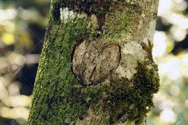 initials carved in tree a heart and initials carved into a tree stock photo picture and