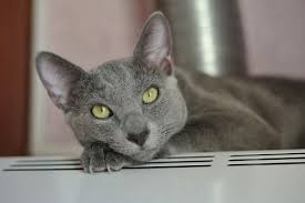 the right diet for cats with kidney disease the conscious cat