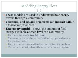 what travels through a food chain or web images Energy and matter chapter 14 lesson 3 essential questions how jpg