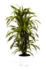 office plant 67 best office plants images on pinterest office plants office