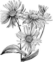 black white flower drawings best 25 flower sketches ideas on