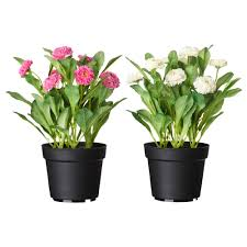 flower plants fejka artificial potted plant ikea