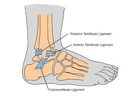 High Ankle Sprain Anatomy Ankle Sprain Prevention Management And Rehabilitation