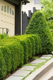 Euonymus Topiary Shrubs You U0027ll Love U0026 Topiaries For Shape Monrovia