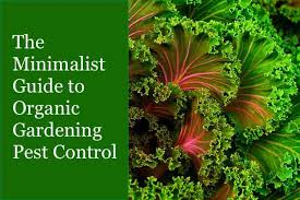 Natural Insecticide For Vegetable Garden by Nav Minimalistinsectcontrol Jpg