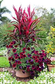 Tropical Potted Plants Outdoor - 11 easy colorful container garden ideas costa farms