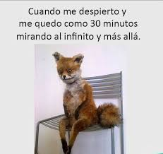 Meme Fox - nice 23 meme fox wallpaper site wallpaper site