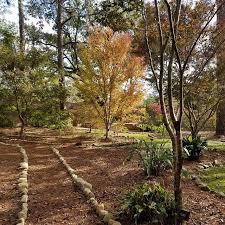 Alabama vegetaion images Mobile botanical gardens 100 acres of gardens woodland in jpg