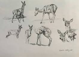 red deer paintings in progress by artist martin ridley