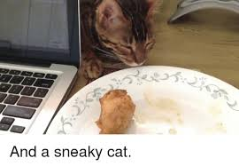 Sneaky Cat Meme - 25 best memes about sneaky cats sneaky cats memes
