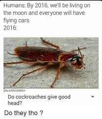 Flying Cockroach Meme - humans by 2016 we ll be living on the moon and everyone will have