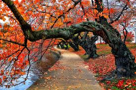 nature river bench water park trees leaves colorful autumn fall