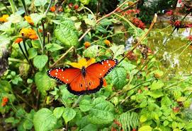 free photo butterfly garden flowers plants free image on