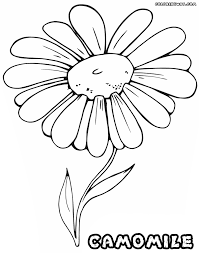 camomile coloring pages coloring pages to download and print