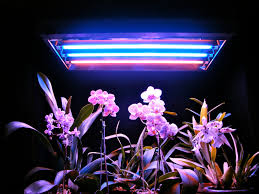 fluorescent grow lights for gardening indoor advice for your