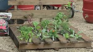 buchanans native plants turn old pallet into beautiful garden abc13 com
