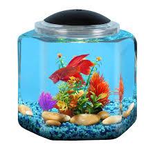 amazon com api betta kit hex fish tank 2 gallon pet supplies