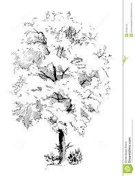 lime silhouette lime tree stock vector image of season single plant 30036422