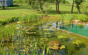 Natural Pools by Images About Eco Piletas And Backyard Natural Pools Pictures