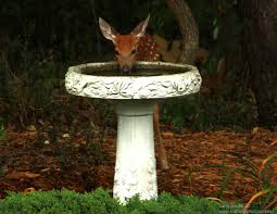 not a bird unexpected bird bath visitors the national wildlife