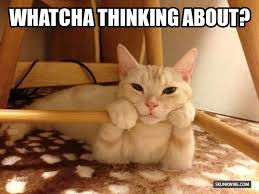 Thinking Cat Meme - five signs that you love your cat a bit too much awwtopia