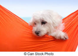 pampered puppy lying in hammock pampered puppy dog relaxes