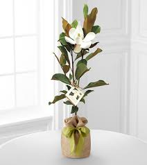better homes and gardens flowers fast online florist send