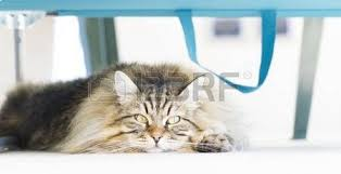 Cat Under Chair Funny Cat Sleeping Upside Down Stock Photo Picture And Royalty