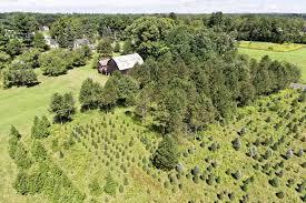 Natural Christmas Tree For Sale - 8 christmas tree farm homes for sale u2014 life at home u2014 trulia blog