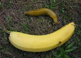 Banana For Scale Meme - how the banana for scale became the yardstick of the internet