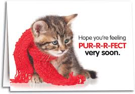 feel better cards cat themed get well cards smartpractice veterinary