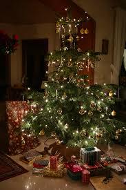 where to get a live christmas tree in toronto toronto mom now