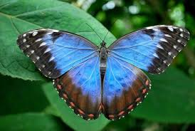 what does a butterfly symbolize