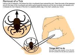 Ticks In Backyard Ticks And Tick Control