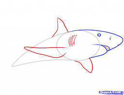 how do you draw a shark step by step easy drawing tutorials for