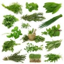 les herbes aromatiques en cuisine herbe aromatique cuisine maison design edfos com