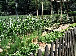 front yard vegetable garden landscape rustic with raised garden beds