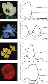 how to colour a flower on the optical principles of flower