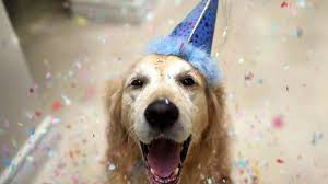 dog birthday party your dogs birthday party at the best dog day care in miami