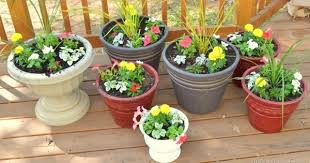 How To Avoid Snakes In Backyard Worried Of Snakes These Plants Will Repel Snakes From Your