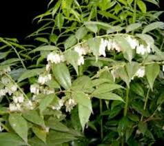 Fragrant Plants List - 238 best fragrant native flowers for south florida for those of us