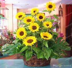 2018 sunflower easy organic sunflower seeds for