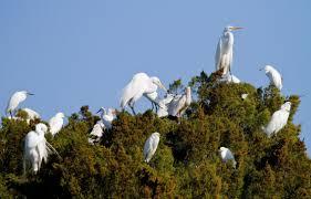 migratory bird treaty act audubon