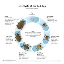 How To Identify Bed Bugs Bed Bug Identification Neobed Bugtask Force