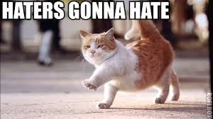 Mean Kitty Meme - jimmyfungus com haters gonna hate my own personal collection of