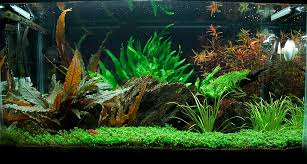 Amano Aquascaping Aquascape 10 Gallon Flickr