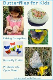 life cycle of a butterfly pictures facts face painting and