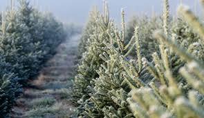 start a christmas tree farm hobby farms