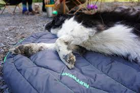 Medium Sized Dog Beds Dog Beds Mats U0026 Blankets Comfortable U0026 Durable Ruffwear