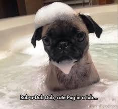 Depressed Pug Meme - depressed pug meme 28 images depression quotes sad pug meme